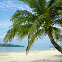 image of palm tree on tropical beach ** Note: Slight graininess, best at smaller sizes